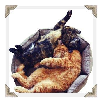 Cat Bed & Blanket