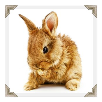 Rabbit, Bird and Care