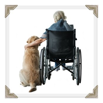 Pet Therapy Visit