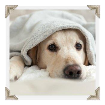 Warm Water Blanket