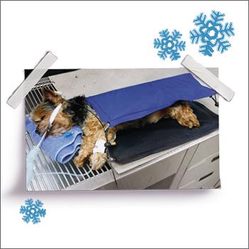 HotDog Patient Warming System