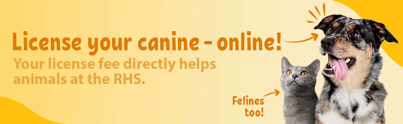 Online Pet Licenses
