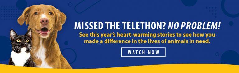 Telethon Videos