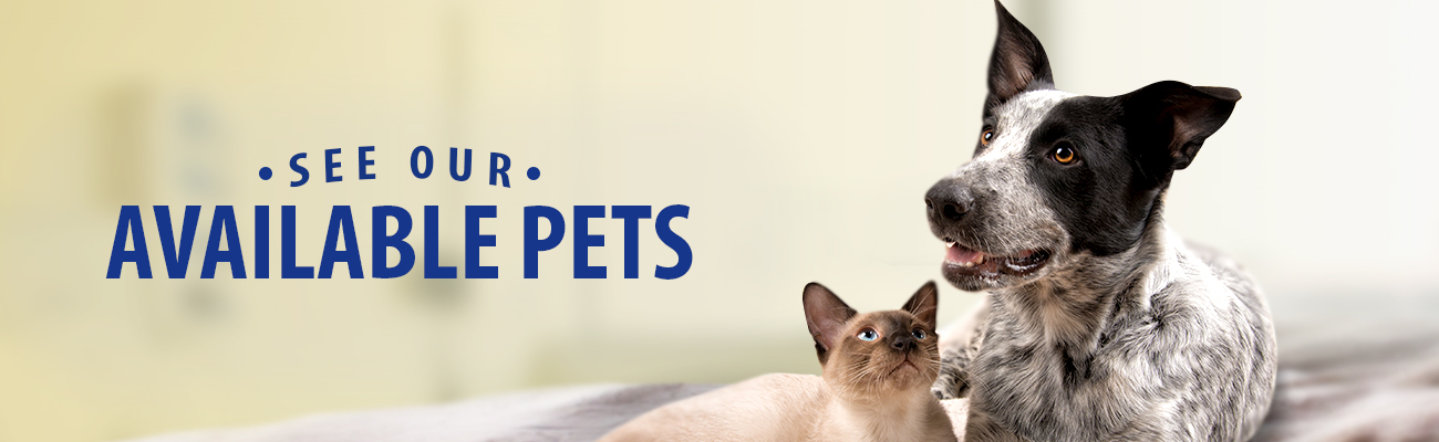 See Adoptable Pets
